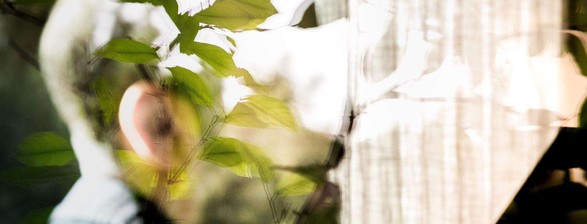 Yakir Arbib immagine astratta con piante